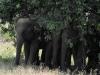 dscn1093-elefanti