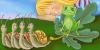 il principe e la rana; Calvino