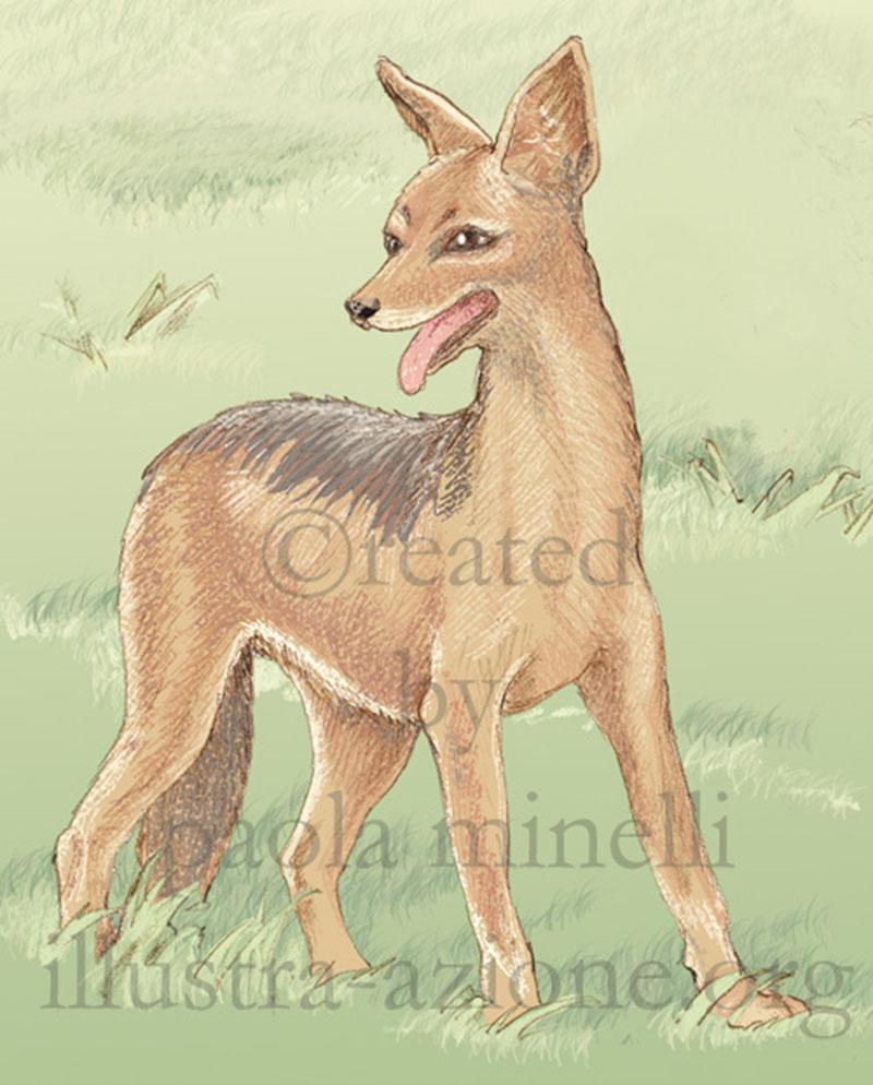 realismo-animali